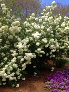 Beautiful Flowering bush