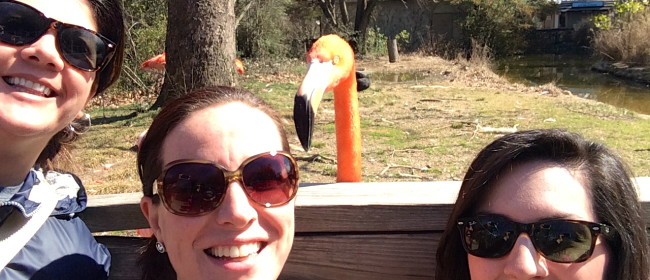 Photobombing at the Zoo